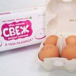 популярные куриные яйца