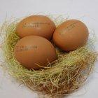 возбуждающие яйца куриные купить в москве