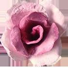 розы из упаковки